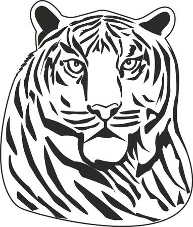 boldness: Tiger