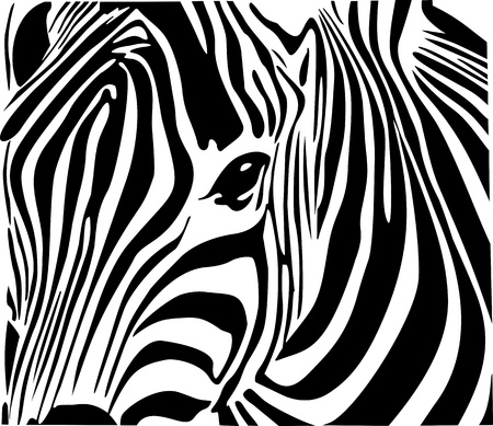 wildlife: Zebra Illustration