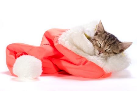 jokes: the  kitten sleeping in the Santa Stock Photo