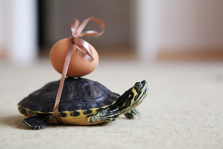 holiday movies: Easter turtle