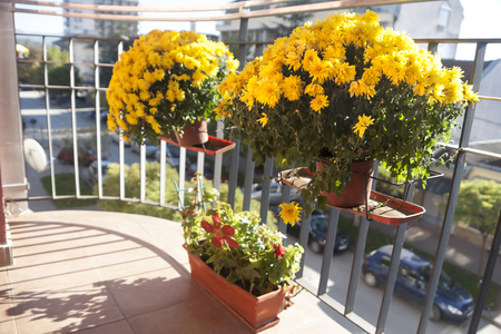 Romantic small balcony with yellow flowers