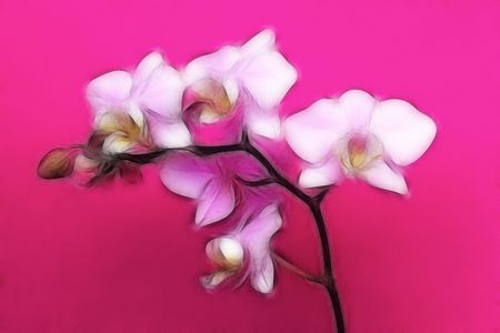 minature: An artistic impression of a minature orchid spray.