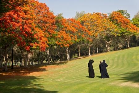gcc: Arab women relaxing among flame trees in Safa Park, Dubai, United Arab Emirates. Stock Photo