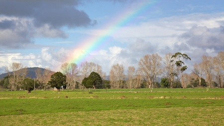 Rainbow over a farm in the Kauri Coast area, Northland, North Island, New Zealand.