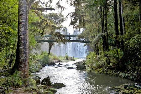 Whangarei Falls, on the Hatea River, North Island, New Zealand  photo
