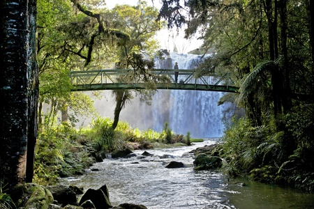 Whangarei Falls, on the Hatea River, North Island, New Zealand