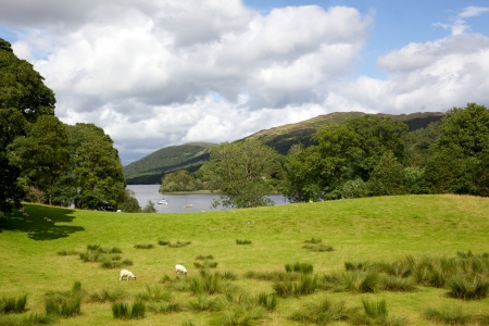 A pasture adjacent to Coniston Water in the English Lake District. Stock Photo - 17160533