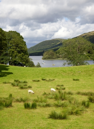 A pasture adjacent to Coniston Water in the English Lake District. Stock Photo - 17160531