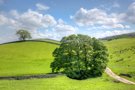Yorkshire Dales: A typical landscape with old stone walls in the heart of Englands Yorkshire Dales. Stock Photo