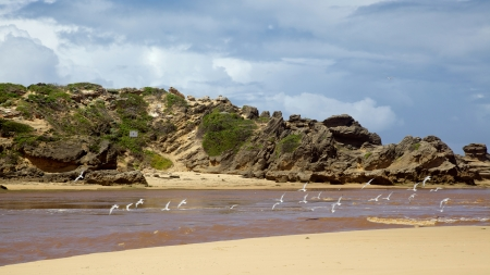 Swift Terns flying near Bushmans River Mouth, in South Africas Eastern Cape. photo