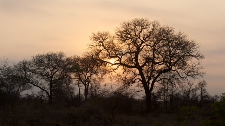 kruger national park: Trees silhouetted against the sunrise in the Kruger National Park, South Africa