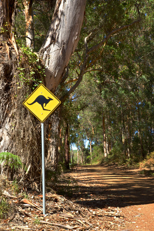 A roadside kangaroo warning sign next to a gravel road passing through indigenous forest near the town of Denmark in Western Australia  photo