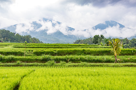 grain fields: Rice Terraces and volcanic mountains on a rainy day in Jatiluwih, in Central Bali, Indonesia. Stock Photo