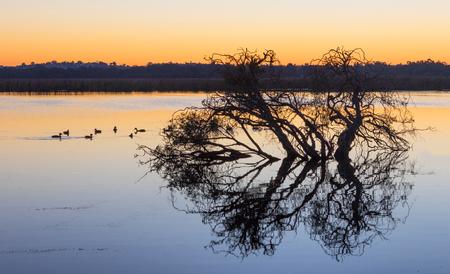 Tree silhouette at dawn at Herdsman Lake in Perth, Western Australia.
