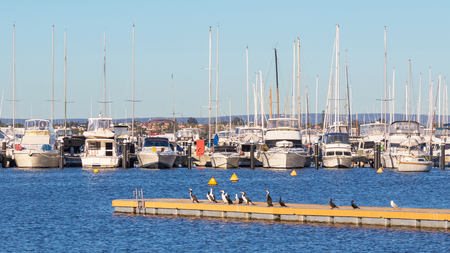 cormorants: Boats lined up at their moorings in the Swan River in Perth, Western Australia, with cormorants resting in the foreground.