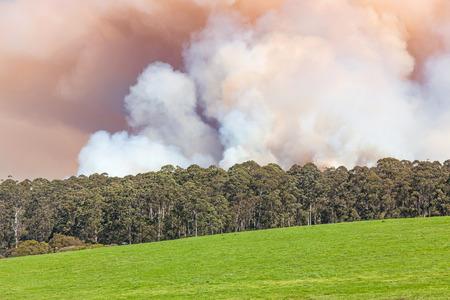 backwoods: A forest fire near the town of Pemberton in Western Australia.