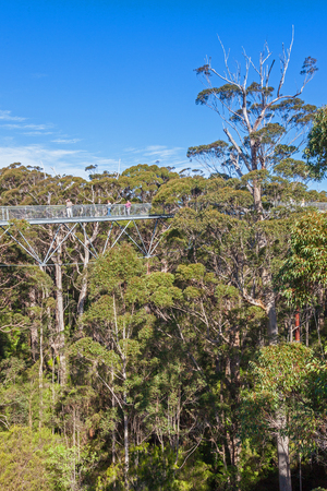 Walpole, Australia, September 21, 2010: Tourists enjoying the Tree Top Walk in the Valley of the Giants, Walpole-Nornalup National Park, near Walpole, Western Australia