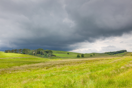 Sheep grazing in a farm near Hadrians Wall in Northumberland, England while a storm approaches.