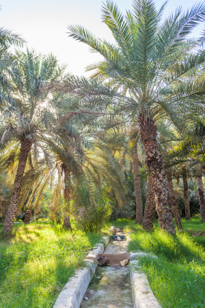 A traditional falaj (irrigational channel) in Jimi Oasis in Al Ain, in the emirate of Abu Dhabi, United Arab Emirates.