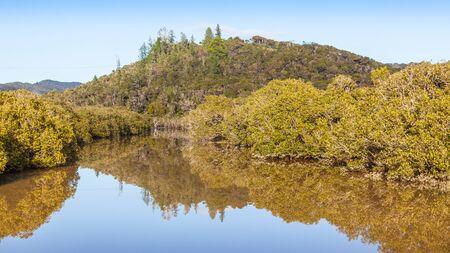 Mangroves between Paihia and Haruru Falls, Northland, North Island, New Zealand.