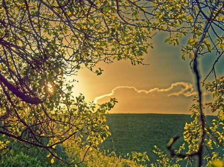 Sunset through the trees, summer fields. 版權商用圖片