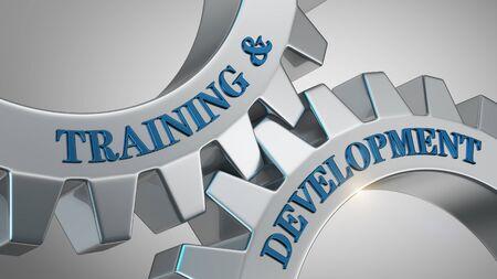 Training & development written on gear wheel Stock Photo