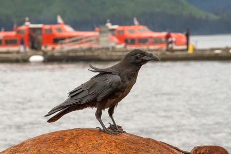 Crow sitting on a rusty ball