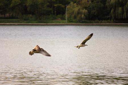 Few birds fishing in a lake