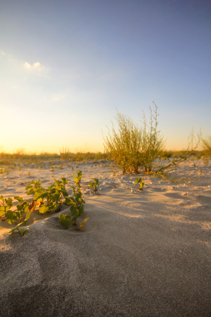 Empty beach at sunset