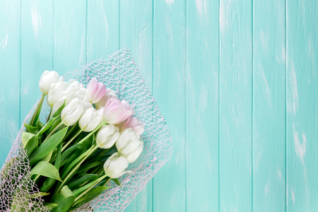 Pink and White Very Tender Tulips on Green Blue Wooden Background. Copyspace