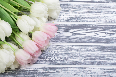 Pink and White Very Tender Tulips on White, Gray Wooden Background. Copyspace