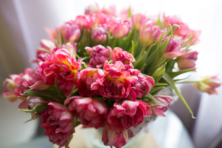 Bouquet of Pion-shaped tulips on a light background. Holiday card.