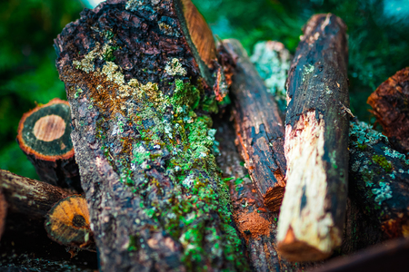 old pile with moss and firewood. close up