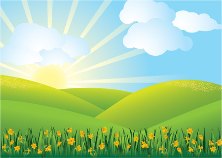 Daffodil Field Stock Vector - 5230555