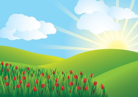 tulips: Tulip Field