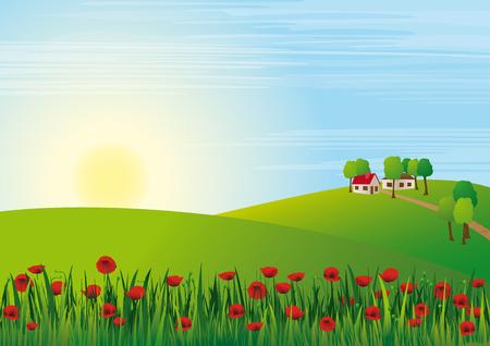 Poppy Scenery