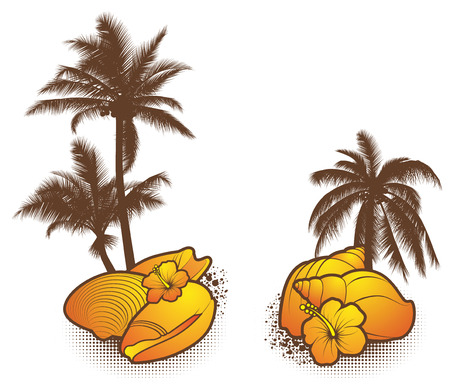Seashell Elements, orange - vector
