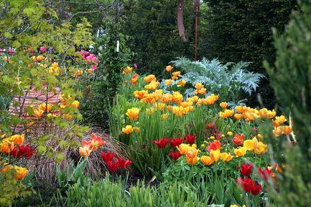contrasts: Tulips Stock Photo