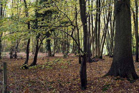 deciduous woodland: Deciduous woodland in Autumn colours