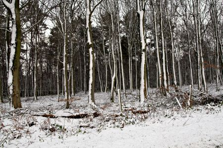 keepout: Snow in Forest Stock Photo