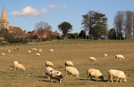 Jacob and other sheep grazing on a field near the village church photo