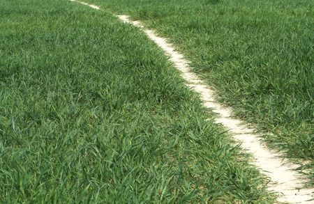 Path of parched earth through early wheat crop Stock Photo - 905662