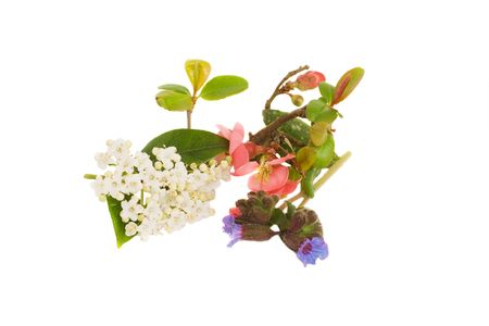 Red, Pink & Blue arrangement of spring colors Stock Photo - 2631443