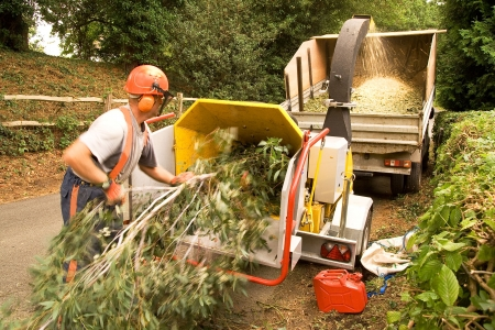 Man pushing eucalyptus bough into a chipper to be loaded on a pick-up