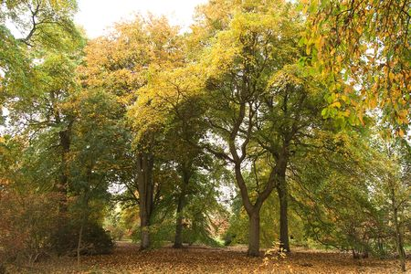 English Woodland in Autumn colors - Stock Photo - 3786881