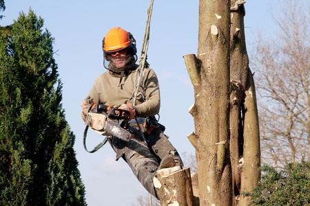 Man hanging in a tree, starting a chainsaw