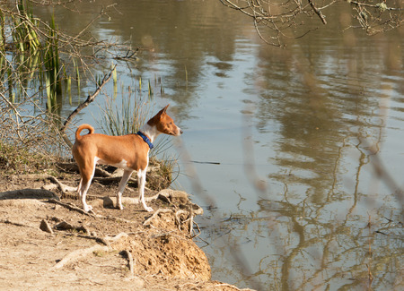 Water-hating dog looking out over a lake Stockfoto