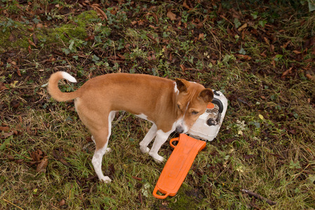 A puppy has found a chainsaw and plans mayhem