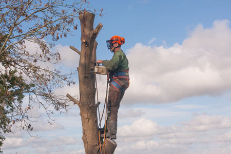 Man standing of branch as he saws through the trunk Stok Fotoğraf