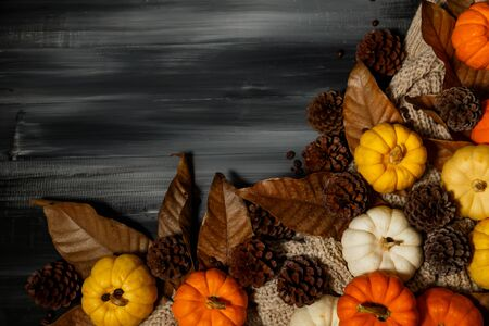 Top view of Halloween day and Thanksgiving day, Pumpkin, Knitting sweater, pinecone on dark background with copy space for text. Halloween concept, Thanksgiving concepts.